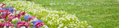 西宮の橋本鍼灸院・秋の花の画像
